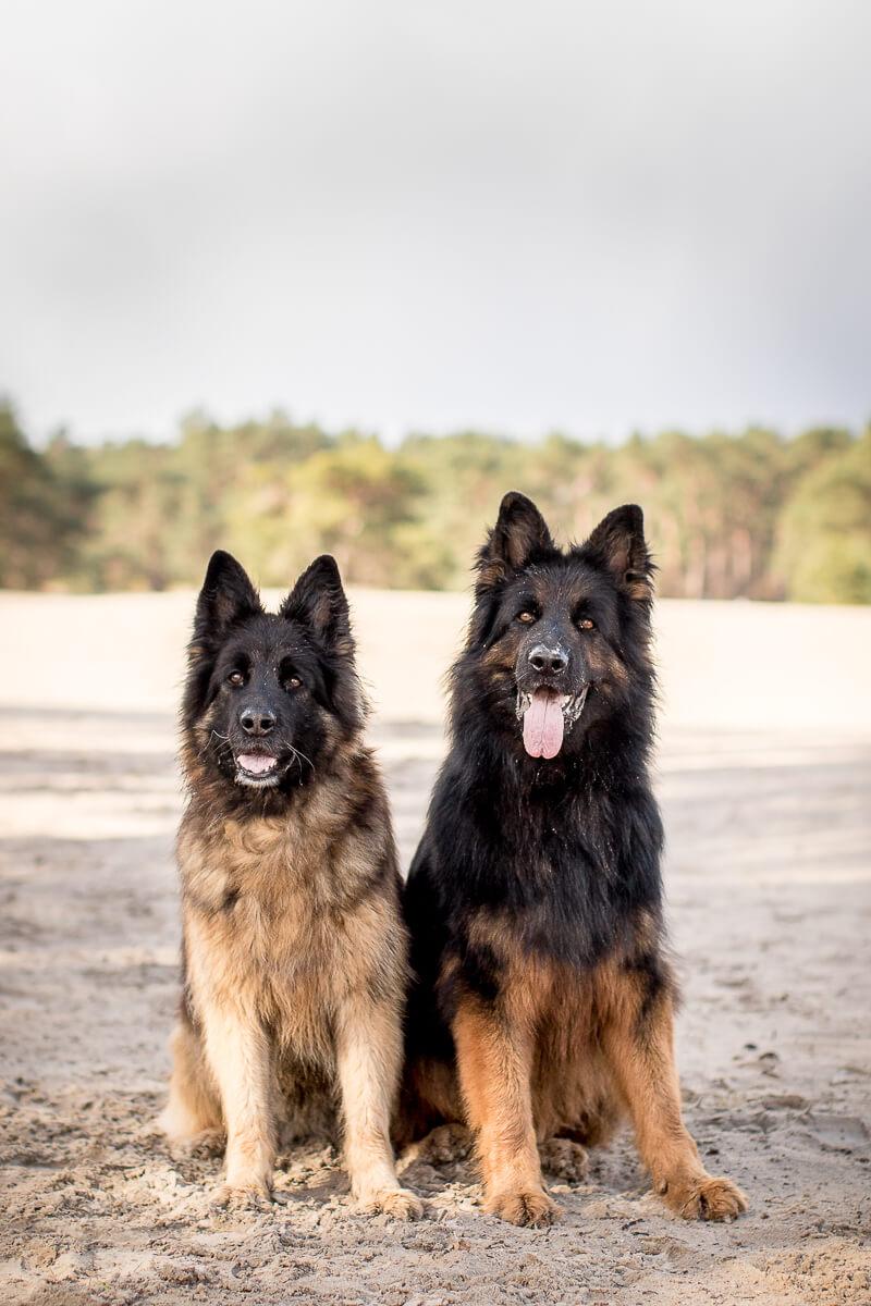 Fotoshoot met hond hondenfotograaf soesterduinen