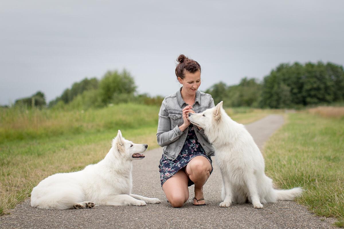 Fotoshoot met je hond Praktijk voor hondengedrag Labrador Zwitserse Herder--6049