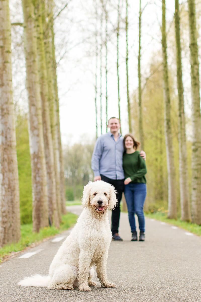 Fotoshoot met hond zeist zwitserse herder portret